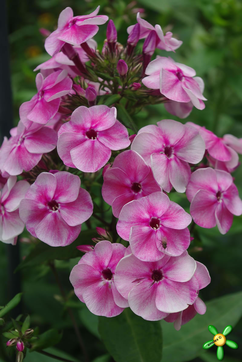 phlox cougars personals All sports schedule - byu cougars.
